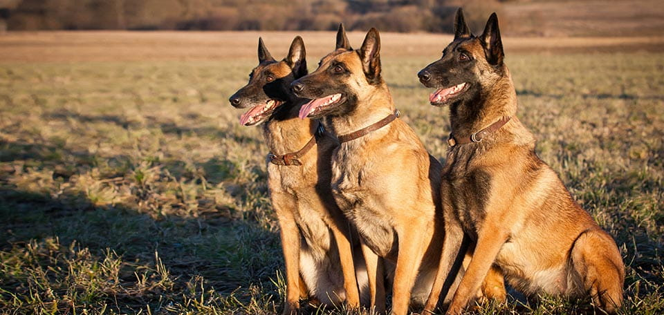 Three Dogs That Did Not Bark: Risk Premia and Stock Market Shocks